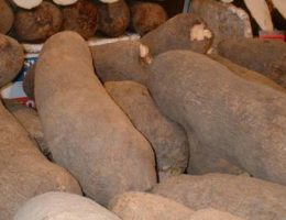 lananipo ou fete des ignames